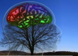 cerebro-arbol